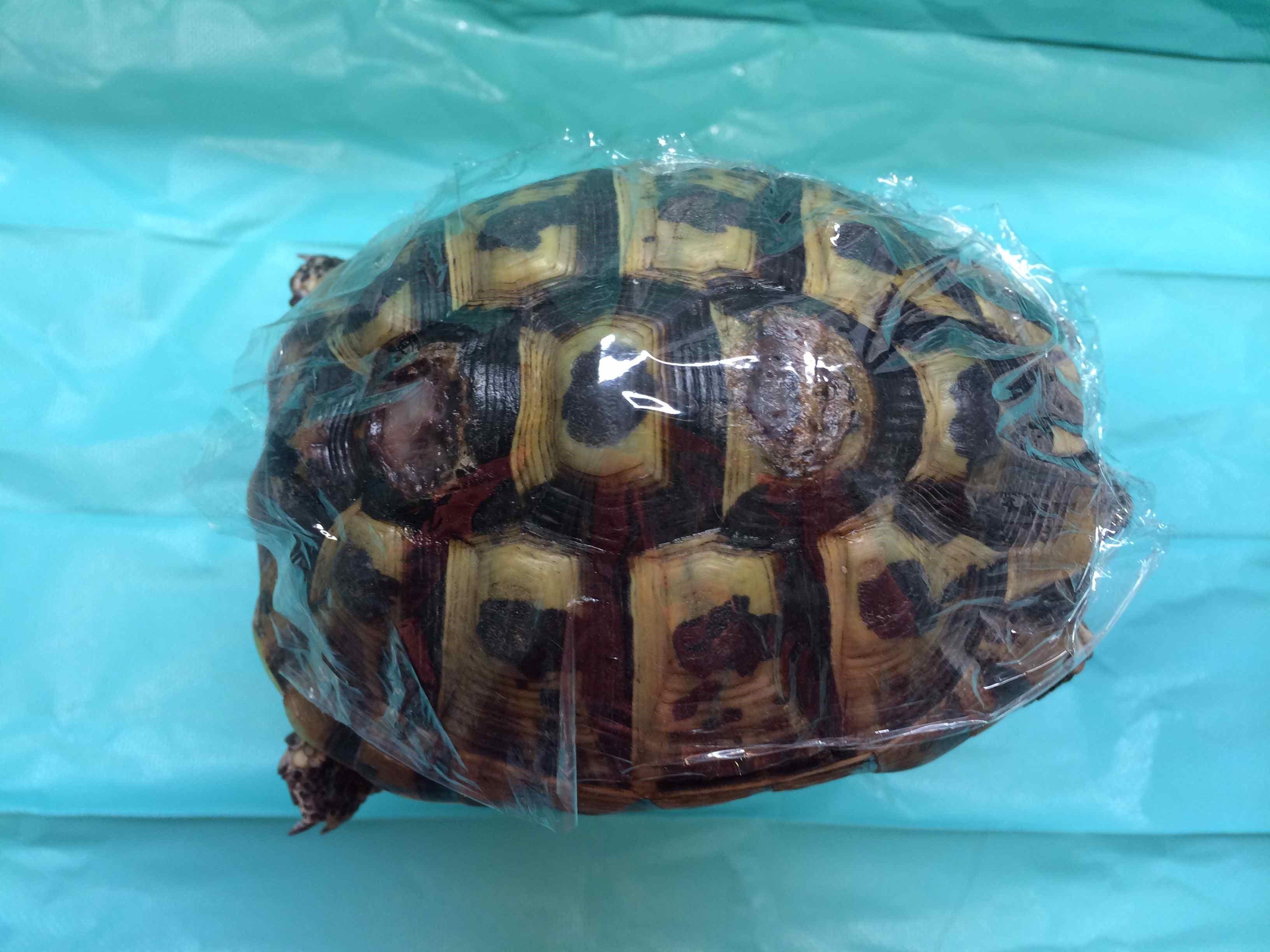 tortue domestique prix