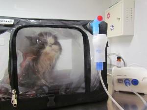Le chat inhale les huiles essentielles dispersées à froid dans la cage. L'air est envoyé sous pression à travers le réservoir contenant les huiles essentielles.