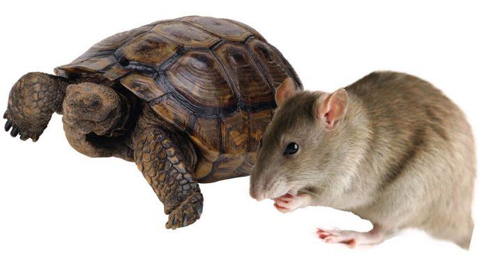 Carapace de tortue : soin