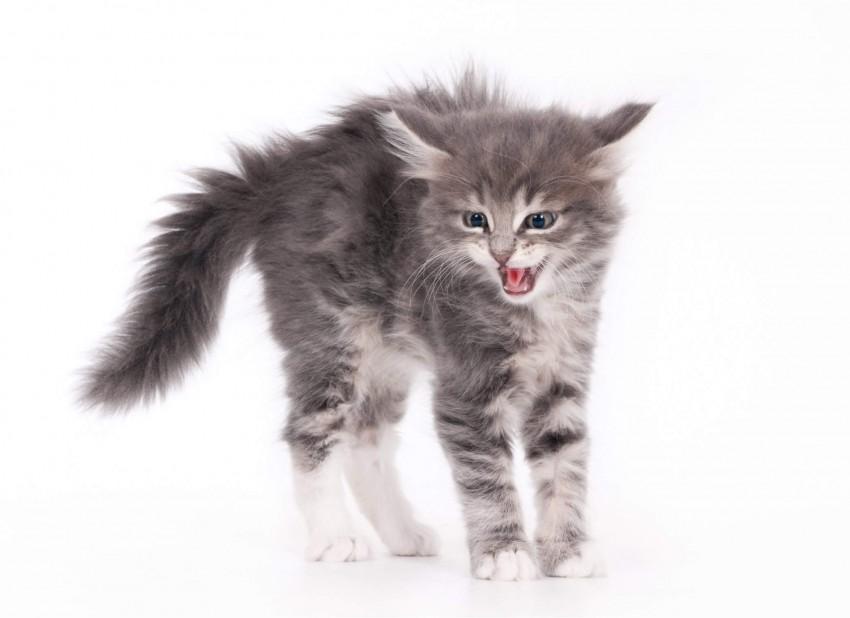 stress du chat