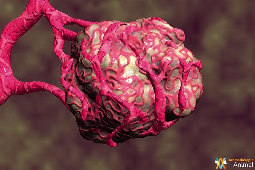 Caudectomie : traitement d'une tumeur