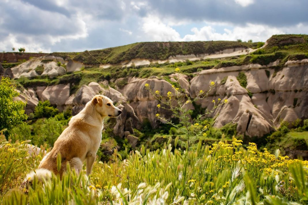 protéger son chien en randonnée