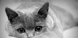 Aromathérapie chez l'animal