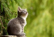 chat et huiles essentielles